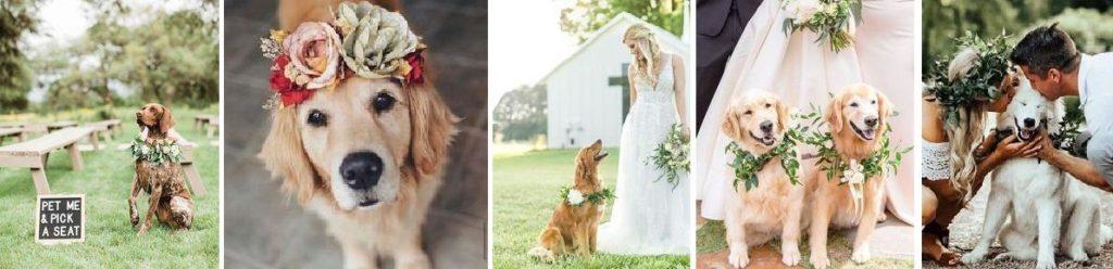 esküvő háziállattal